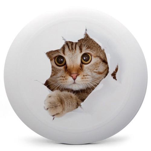 cat-swatch