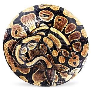 Snake Supercolor Discraft ESP Buzzz